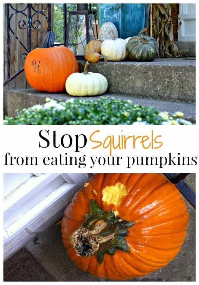 There's a Pumpkin Thief in my Neighborhood | chatfieldcourt.com