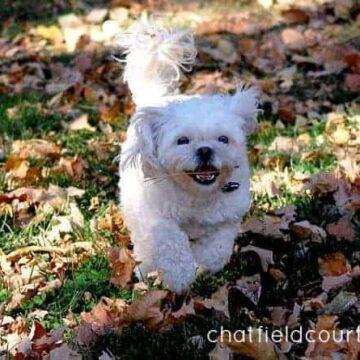 Good To Be Home | www.chatfieldcourt.com