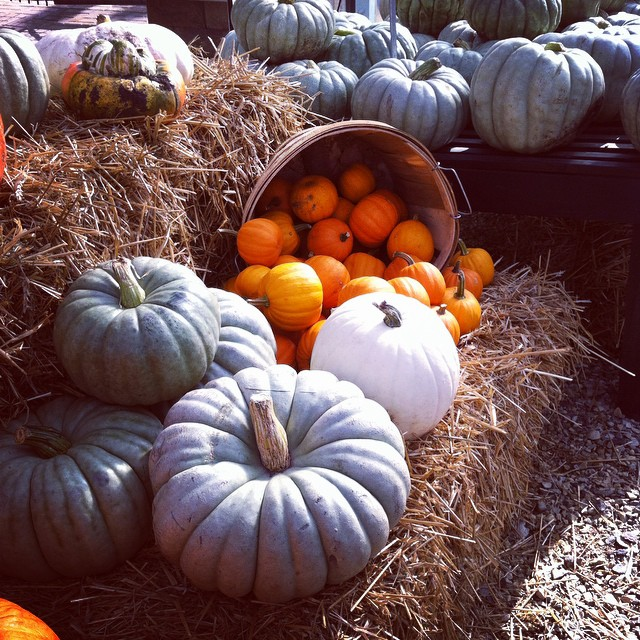 This Fall weather we're having calls for some pumpkin picking. #fall #pumpkin #decor