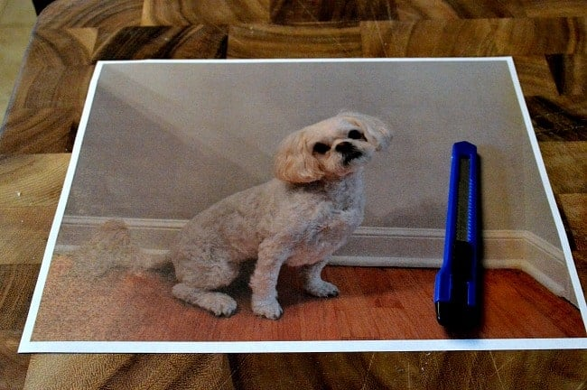 Dog Silhouette | chatfieldcourt.com