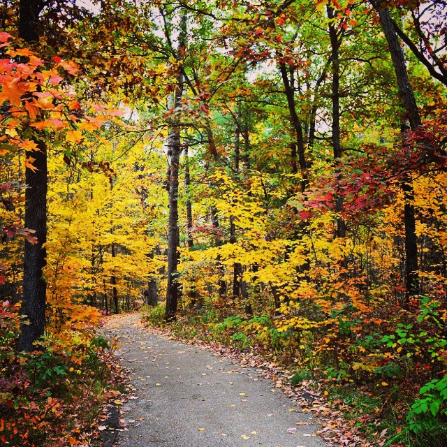You never know the beauty you'll find when you take an unexpected path. #fallcolors #fall #fallday #travel #nature #lookup