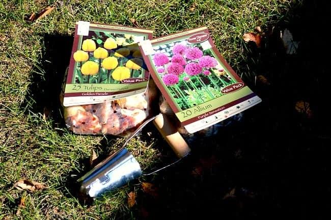 Planting Tulip Bulbs | www.chatfieldcourt.com