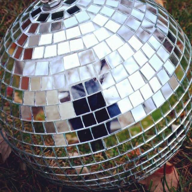 A fun find today at an estate sale. #discoball #mirrorball #isdiscodead? #junkin