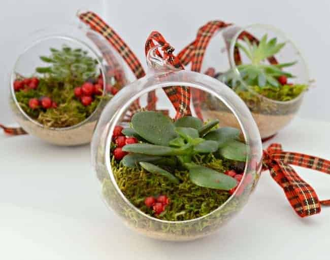Create a living ornament for your Christmas tree with small succulents and a glass ball.