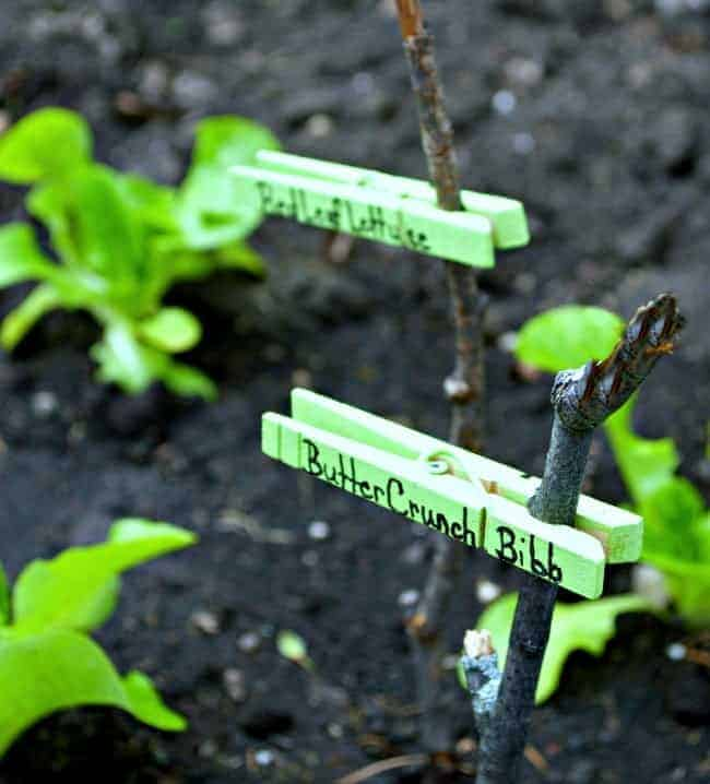These colorful DIY garden markers are not just adorable, they are so easy to make with clothes pins and sticks, supplies you probably already have on hand, and in your yard! | Chatfield Court