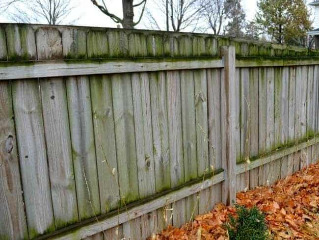 view of mold on wooden fence
