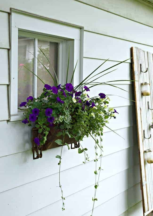 rusty window box hanging on garage window planted with petunias