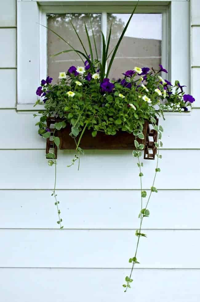 rusty flower window box hanging on garage with petunias