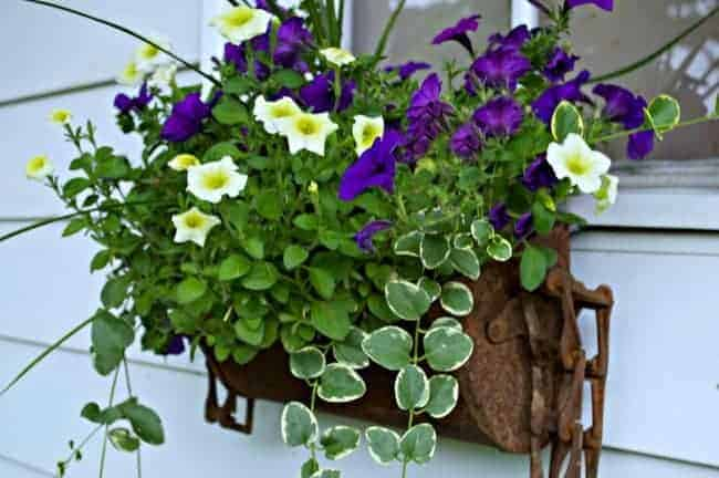 Rustic Window Box - chatfieldcourt.com