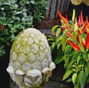 Front porch plants