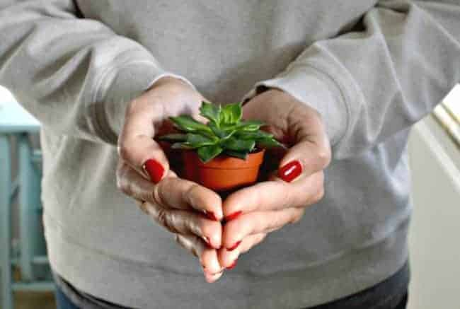 A person holding a small potted succulent