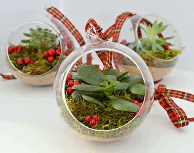 DIY Christmas ornaments made with succulents| chafieldcourt.com