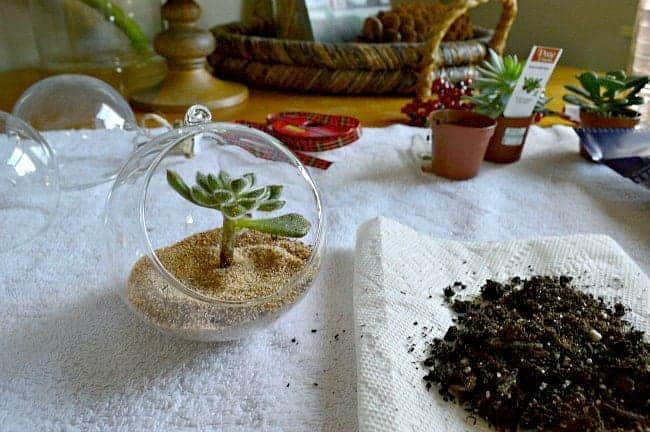 DIY Christmas ornaments sand and succulent in glass ball | chafieldcourt.com