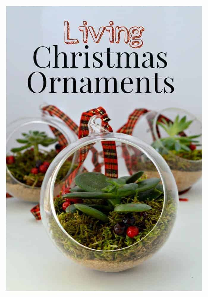 Living Christmas ornaments made with succulents. | chatfieldcourt.com