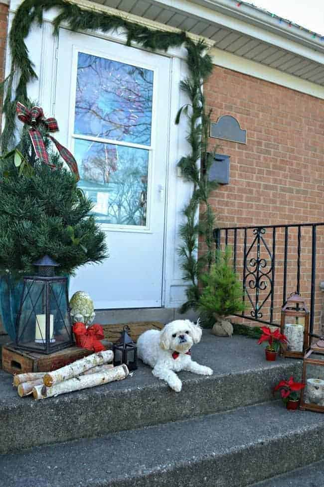 Christmas on our small front porch, which is decorated with a live mini Christmas tree and a cute dog in a plaid bowtie | chatfieldcourt.com
