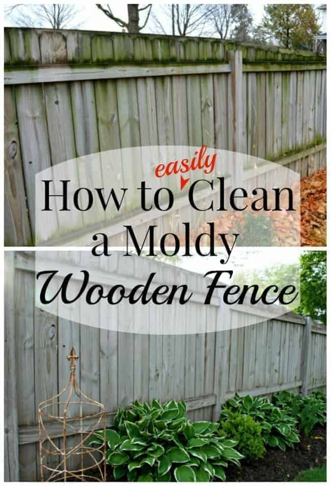 How to easily clean a mold wood fence and make it look brand new.