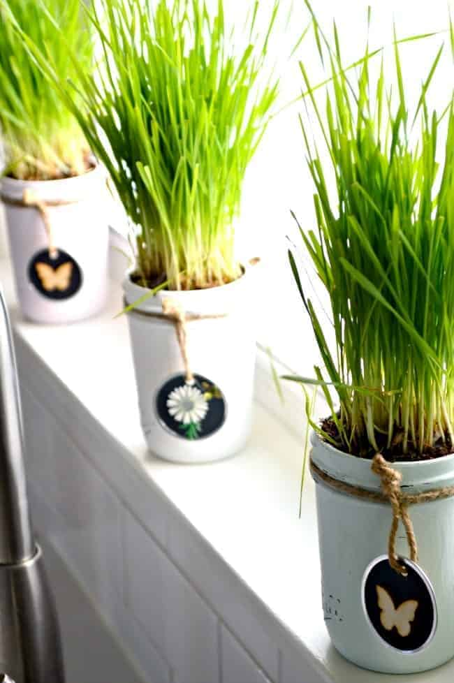 An easy DIY making spring mason jars using pastel colored chalk paints, wheat grass and handmade tags. | chatfieldcourt.com