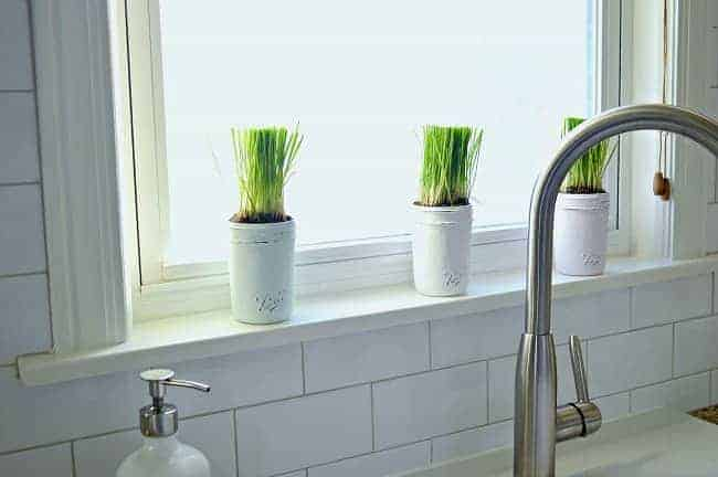 3 pastel colored painted mason jars with wheatgrass planted in them sitting on a windowsill