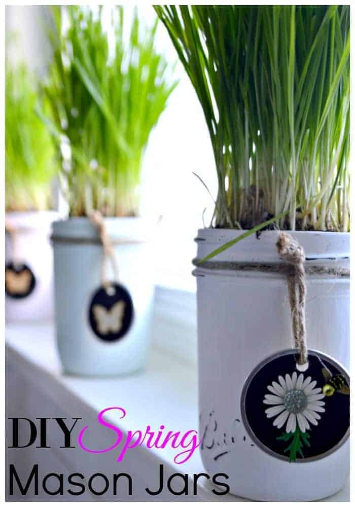 small mason jars painted in pastel colors and planted with wheatgrass on a windowsill