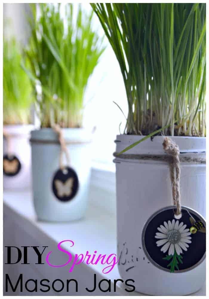 An easy DIY craft making chalk paint mason jar planters using live wheatgrass. | chatfieldcourt.com