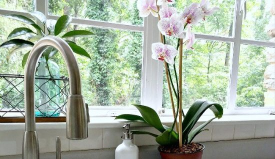 Decorating with an orchid in the kitchen