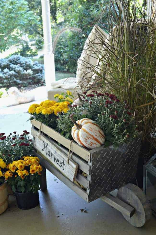 A simple fall front porch tour with rustic wheelbarrow, mums and pumpkins. chatfieldcourt.com