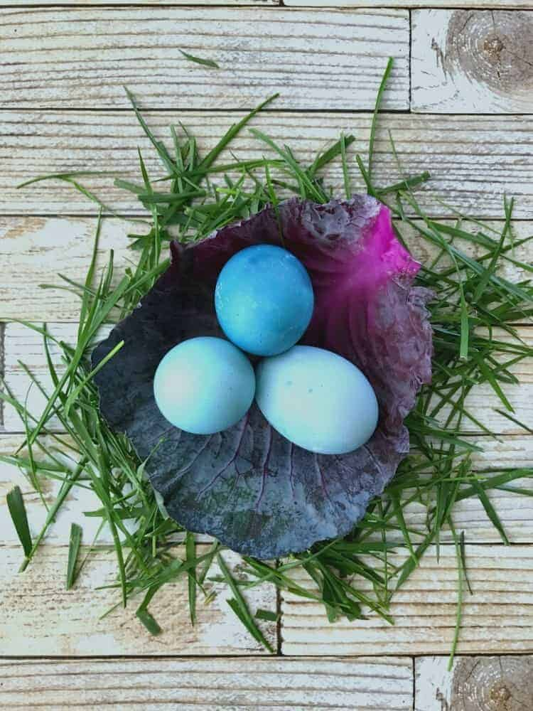 3 blue dyed Easter eggs in a leaf of red cabbage