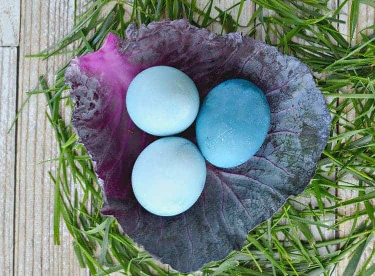 3 naturally dyed blue Easter eggs on a leaf of cabbage