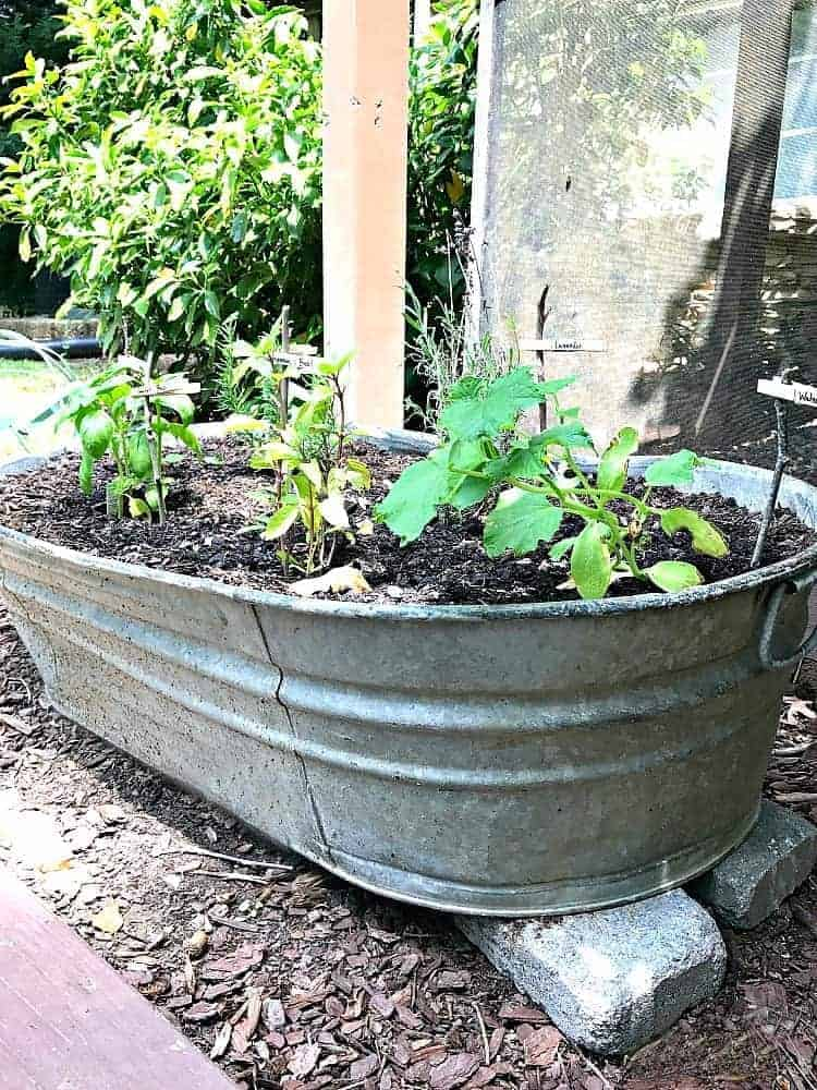 Galvanized metal is a hot trend right now. Check out how you can use galvanized metal containers around the house and in the garden.