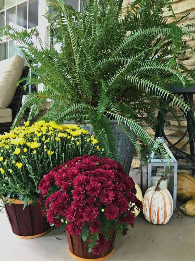 Mums, pumpkins and a fern on a front porch