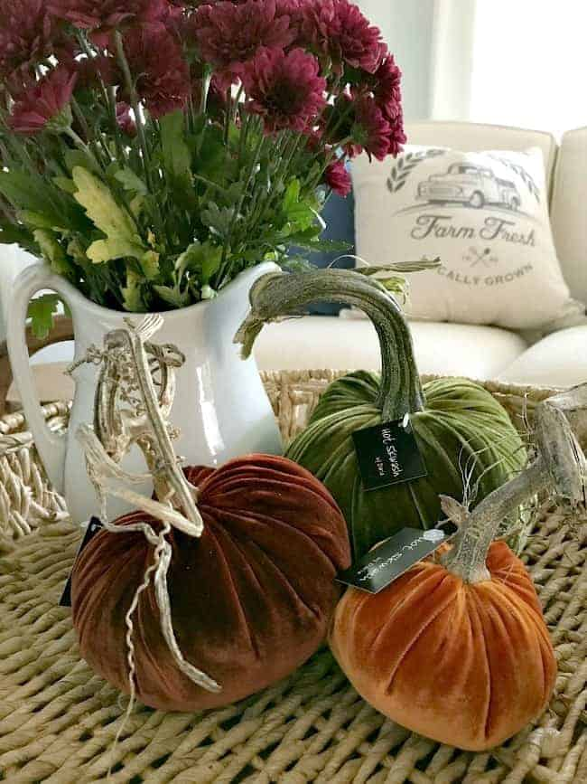 Using a pitcher of fresh mums and a trio of velvet pumpkins to create fall display
