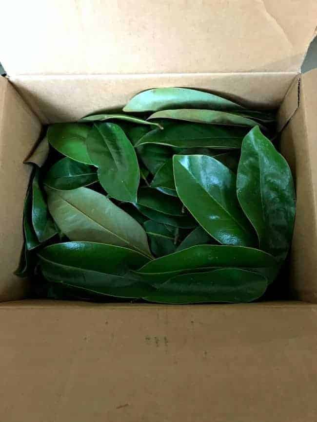 magnolia leaves in a box