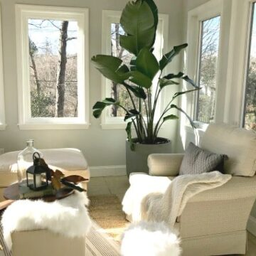 A living room filled with furniture and a large plant