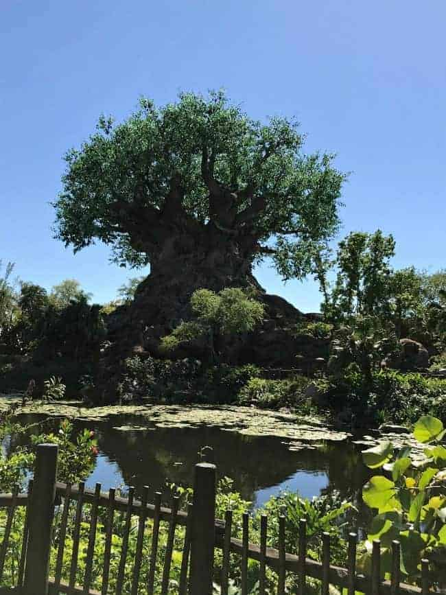 The Tree of Life and beautiful blue sky at Walt Disney World's Animal Kingdom