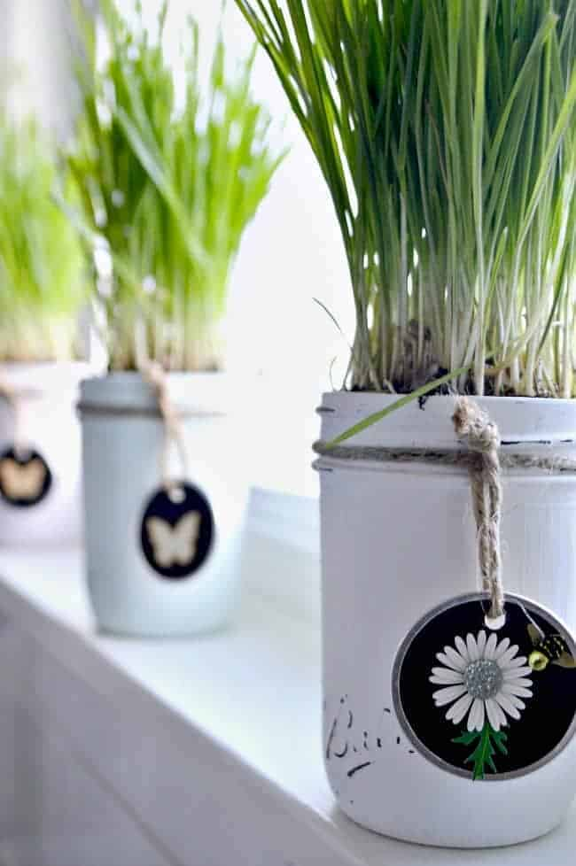 chalk painted mason jar planted with wheatgrass with a handmade flower tag