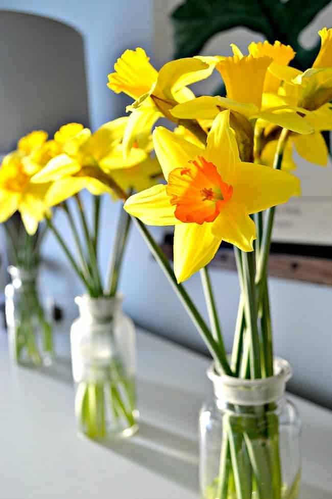 closeup of daffodils in glass bottles on dining room buffet