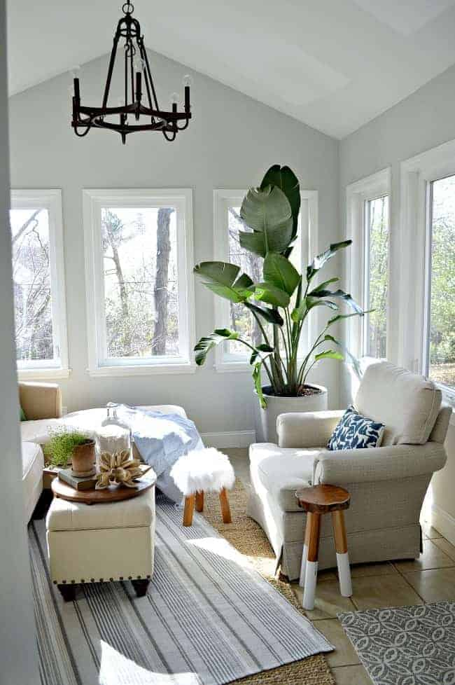 corner of sunroom with striped rug in center and bird of paradise plant in corner next to chair