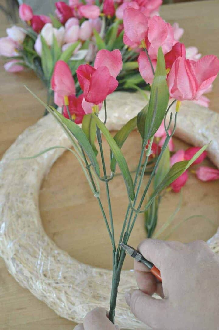 clipping stems of pink tulips with wire cutters