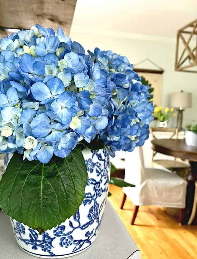 cottage musings for may 2018 and blue hydrangeas in a blue and white vase