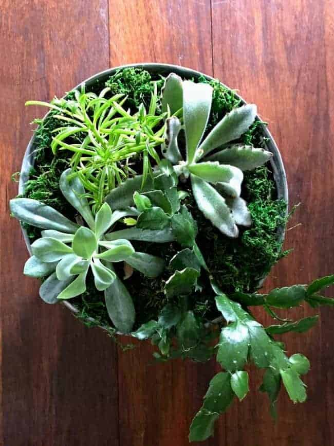 DIY succulent planter as centerpiece on a dark wood table