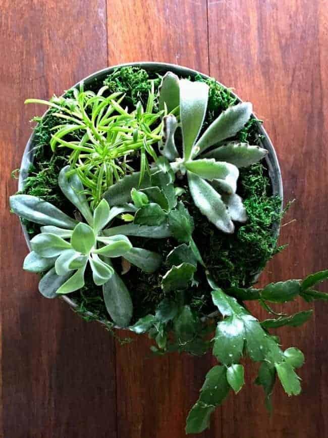 DIY succulent planter as centerpiece on a dark wood table