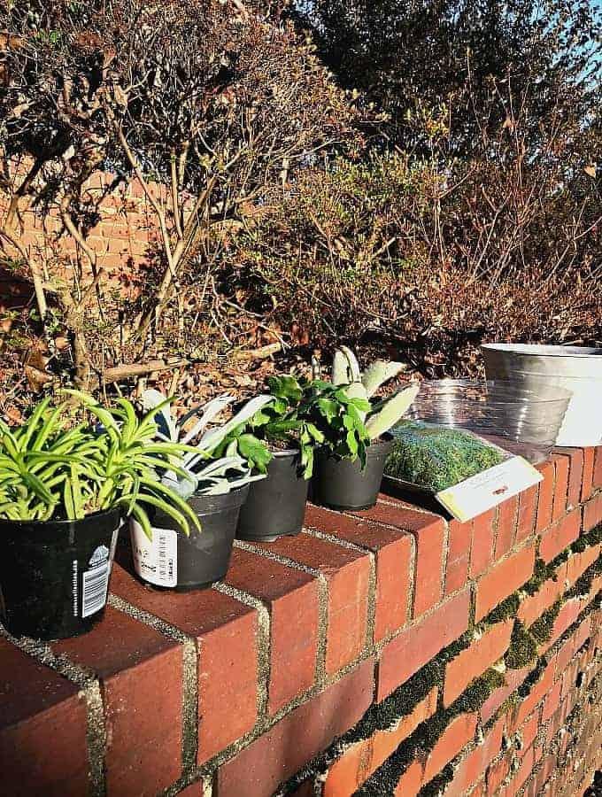 DIY succulent planter supplies including succulents, sheet moss, pot liner and galvanized bucket