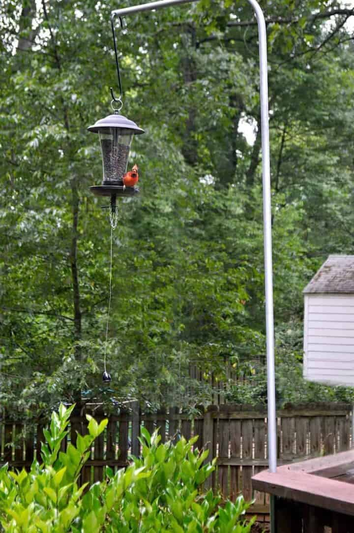 cardinal sitting on bird feeder for How to Stop Squirrels from Climbing a Bird Feeder Pole