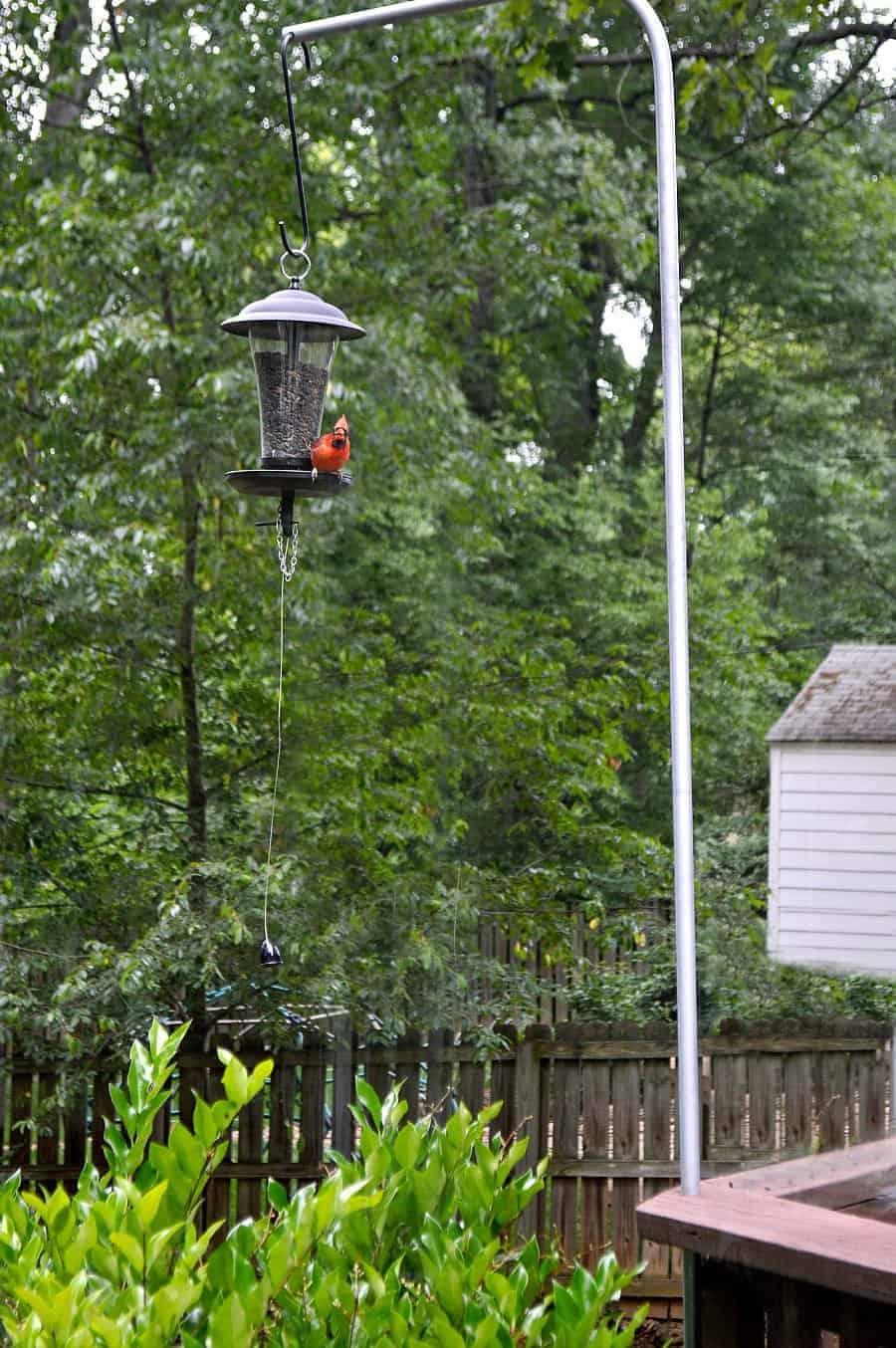cardinal sitting on bird feeder
