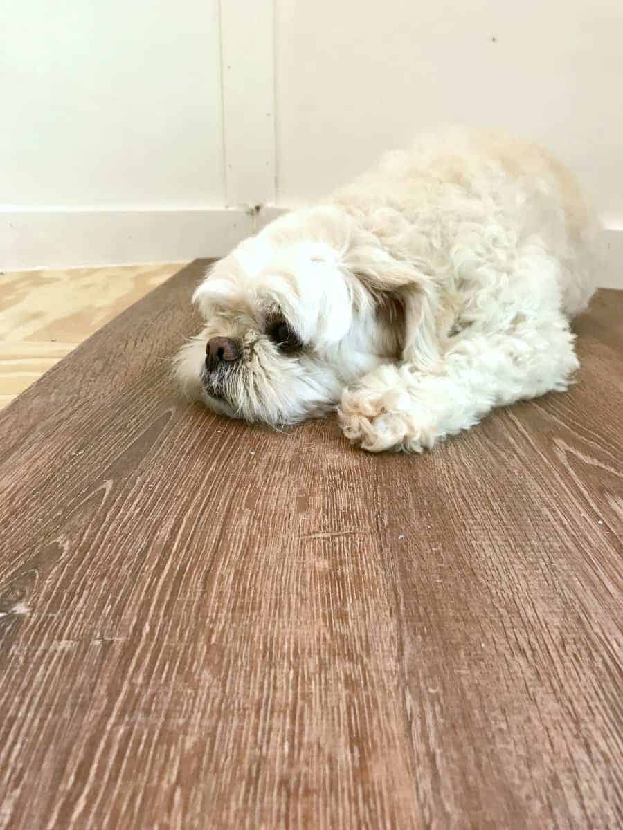 dog laying on new laminate plank flooring for our RV renovation