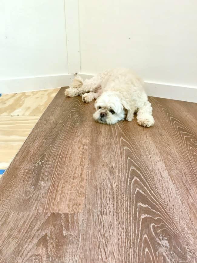 white dog laying on vinyl plank flooring