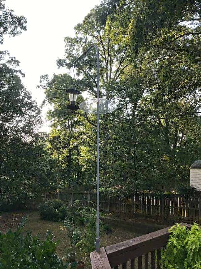 bird feeder hanging on pole high up on deck for How to Stop Squirrels from Climbing a Bird Feeder Pole post