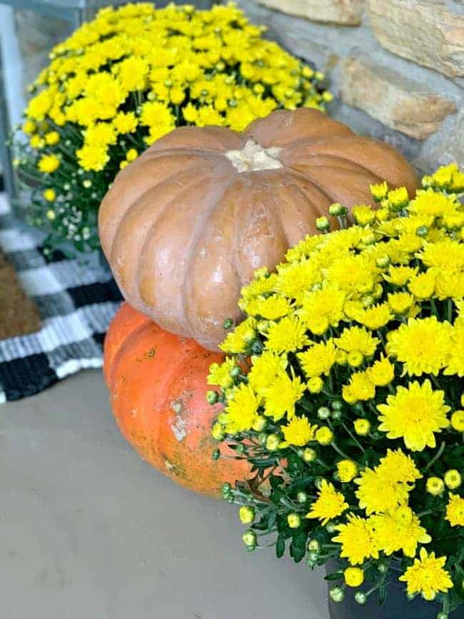 pumpkin stacked on another pumpkin with yellow mums on either side
