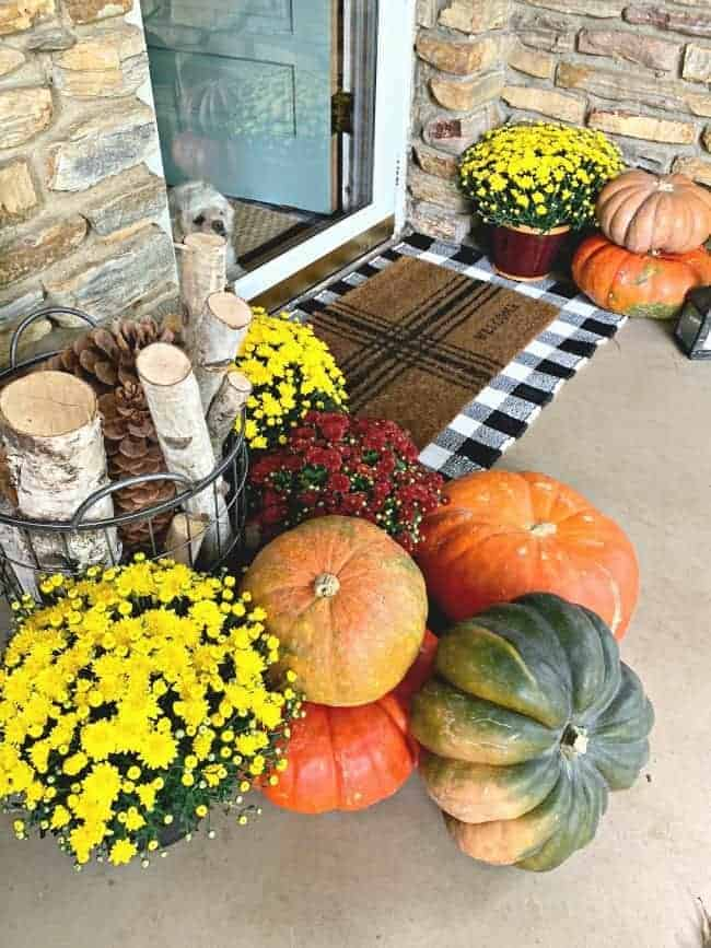front porch fall decor ideas with pumpkins and mums arranged on porch by blue front door