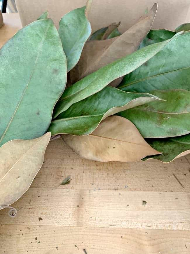 close up of green magnolia leaves and brown backs of the leaves
